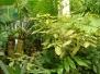 Lowland Tropics