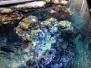 Steinhart Aquarium 1