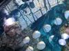 Steinhart Aquarium
