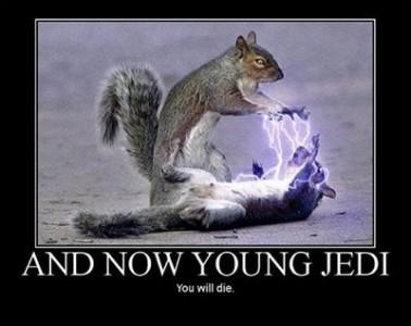 sithcat squirrels