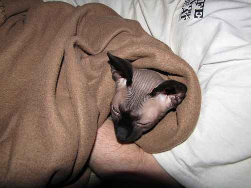 Kitsy wrapped in his blanket and sleeping in papa's arms. Yes, he's spoiled