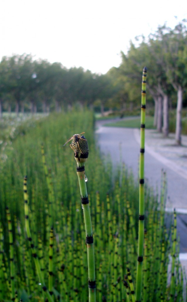 bee and bamboo