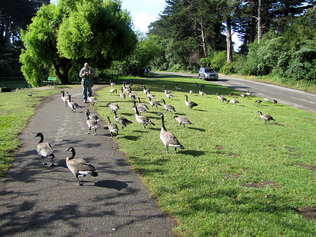 Lastech visiting with the geese