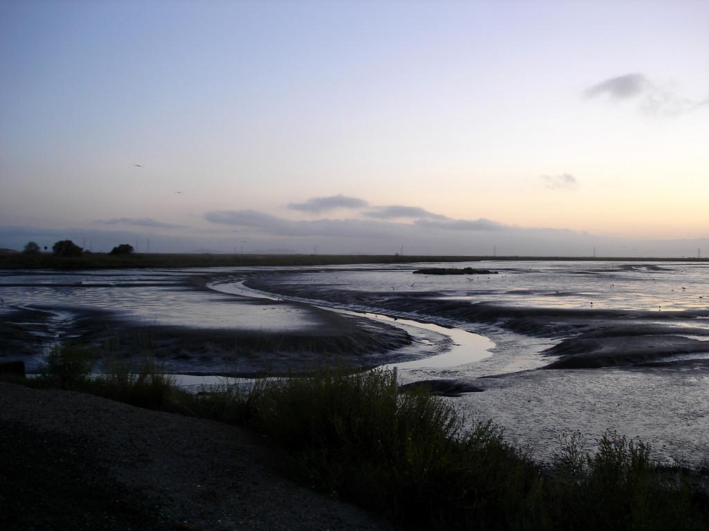 Shoreline at Mtn. View
