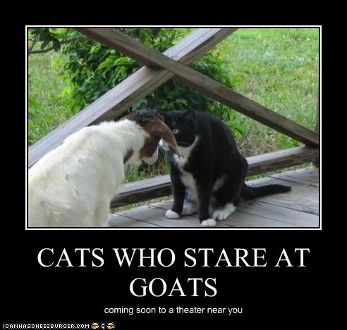 cat and goat