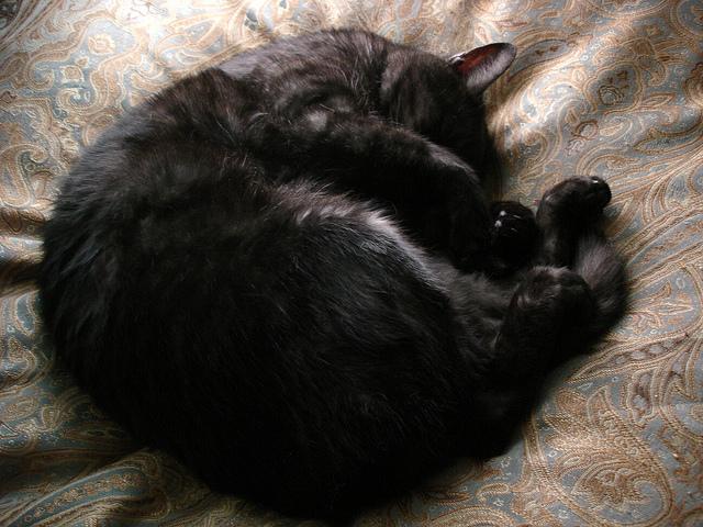 Tito as Cat Circle