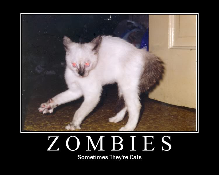 Funny Memes About Zombies : Friday night cat ging with zombies jellybeansofdoom