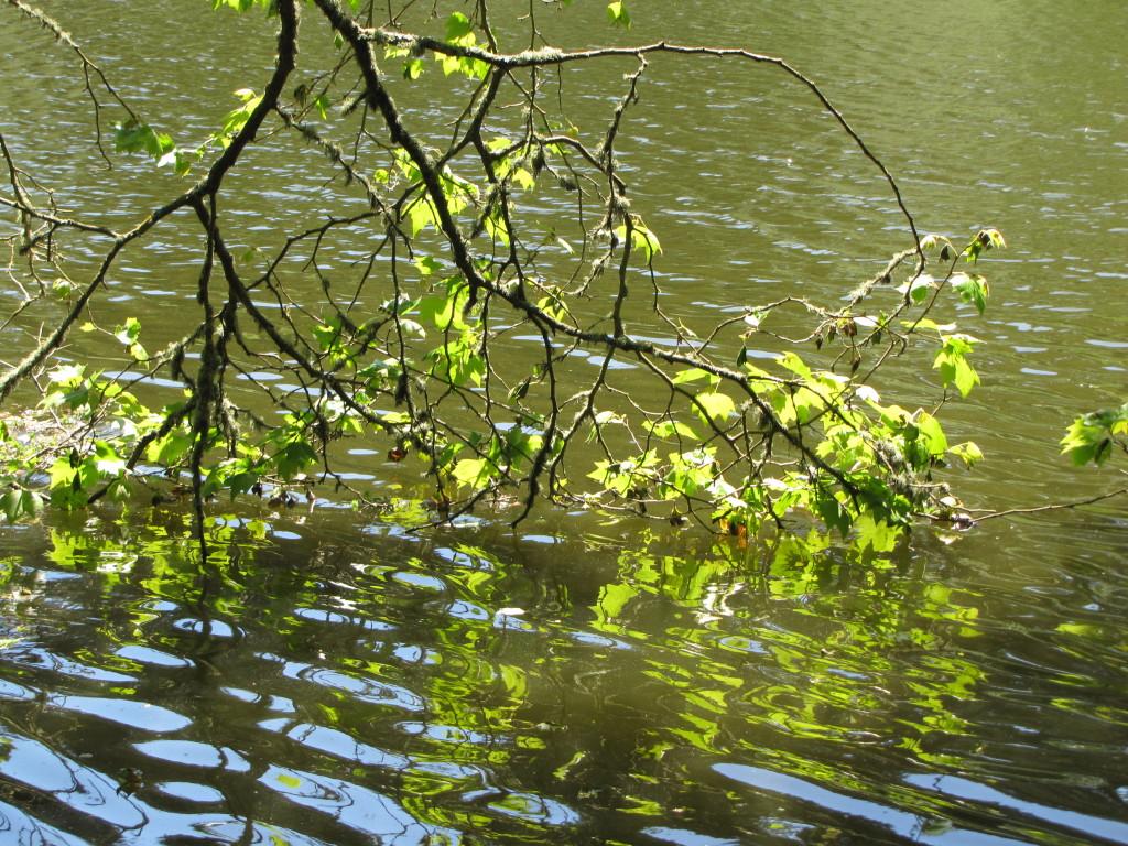 Mallard Lake in Summer