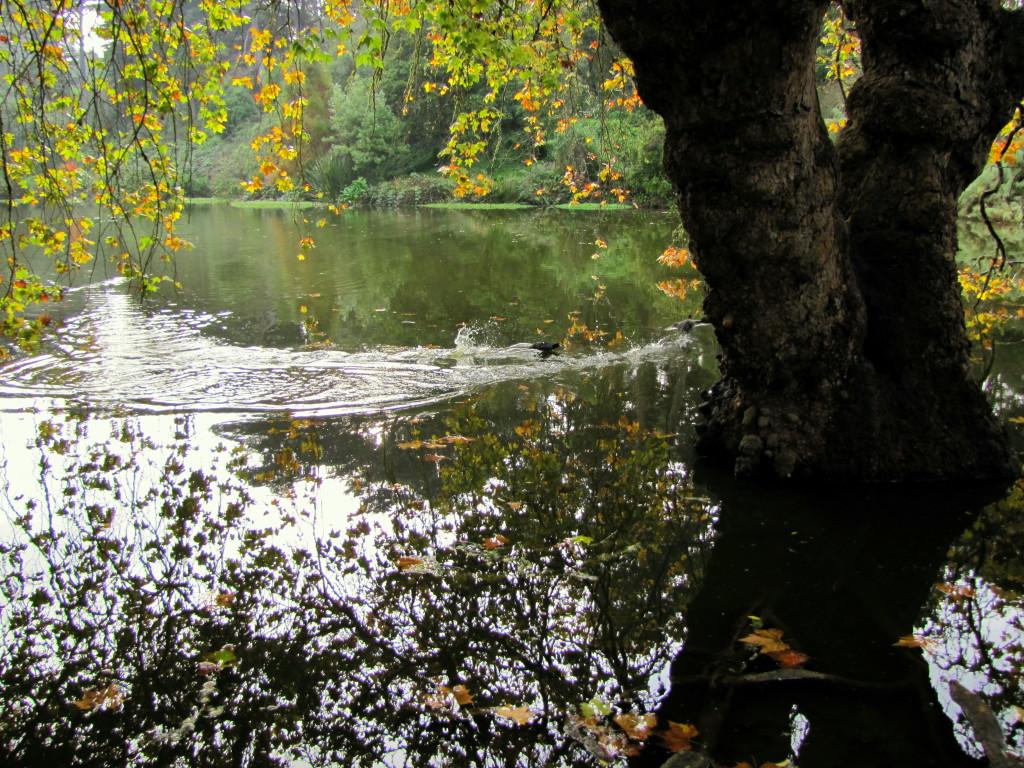 Fall at Mallard Lake