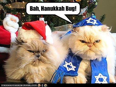 santa hanukkah cat