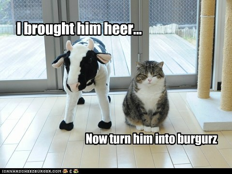 Maru and cow