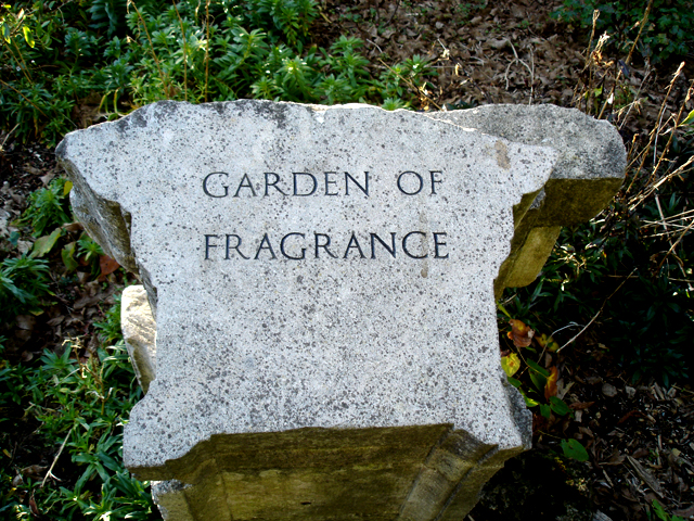 Garden of fragrance