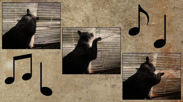 Musical Mini Blinds