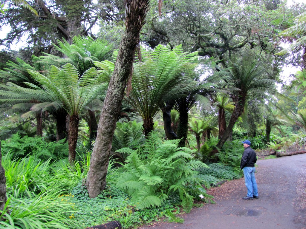 Tree ferns looming over Lastech