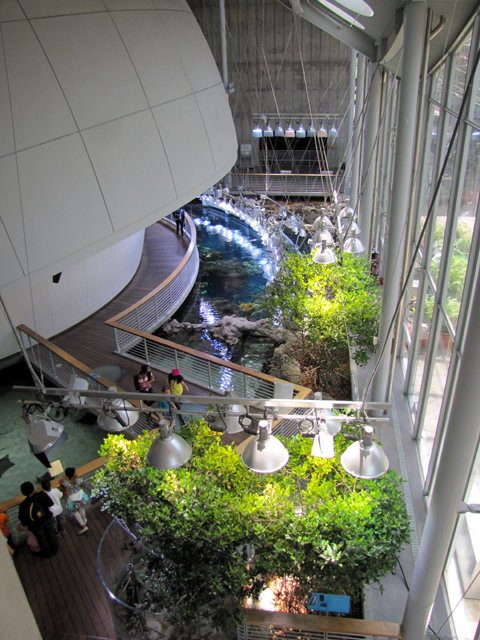 Looking down at the planetarium and the Steinhart Aquarium