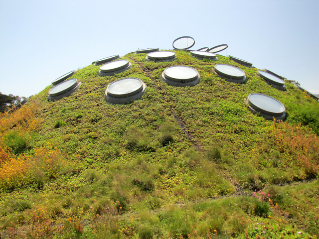 This is the dome over the rainforest.