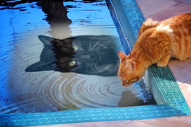 Tito in the pool