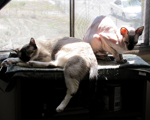 Kitsy and Jenny soaking up a sunbeam