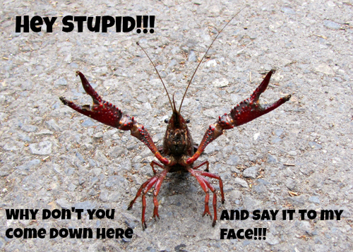 Belligerent crayfish Hey stupid