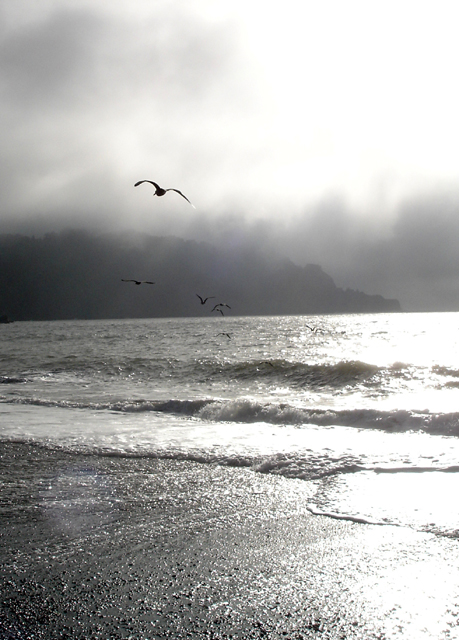 Gulls over Baker Beach