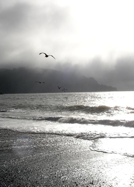 Gulls over Baker Beach