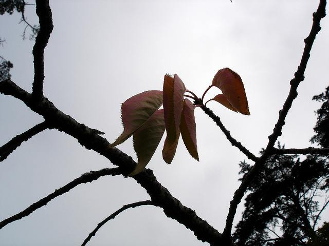 GG Park Arboretum leaves