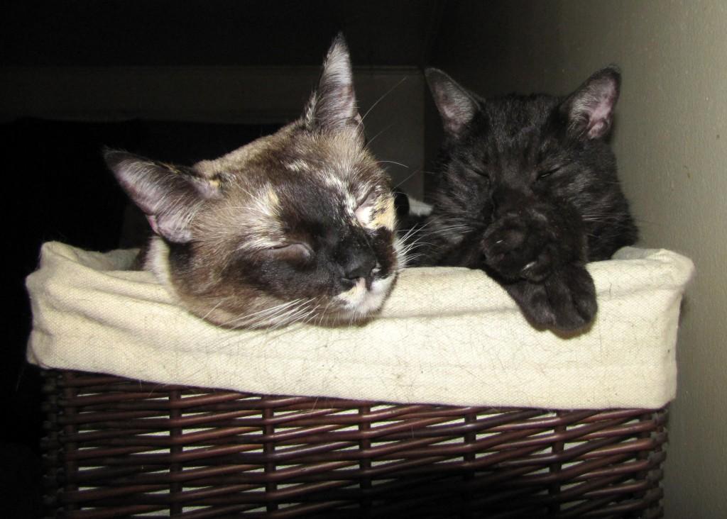 Happy kitties sharing the snuggle box