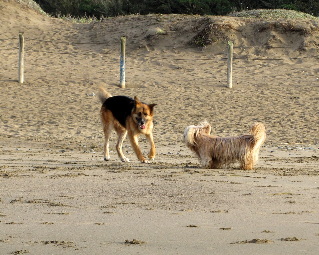 Happy beach dogs