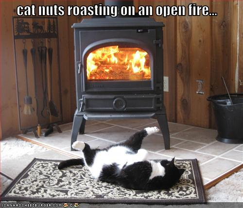 catnuts