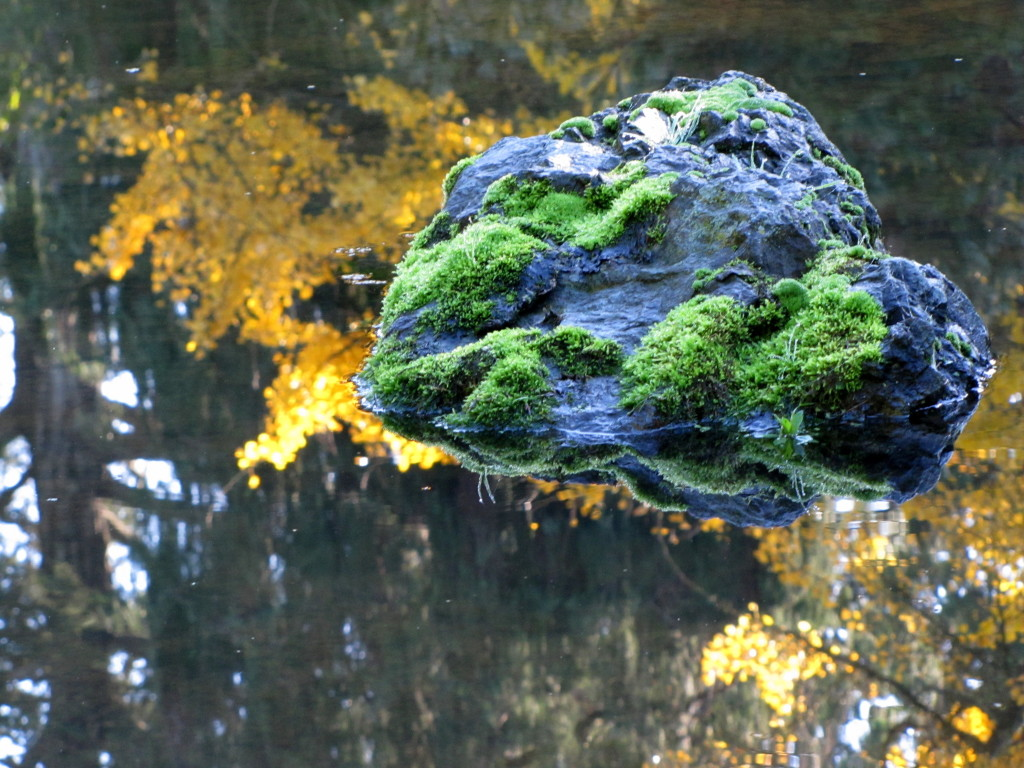Just a rock in a pond
