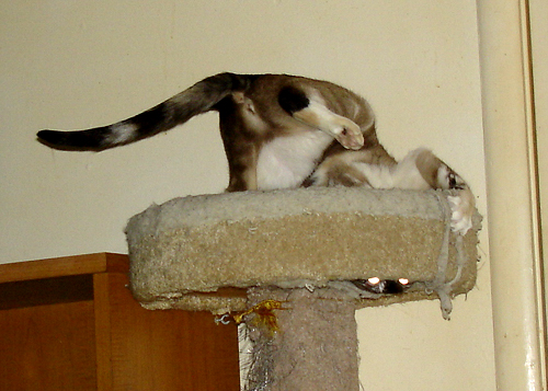 Jenny going monkey crazy on cat tower