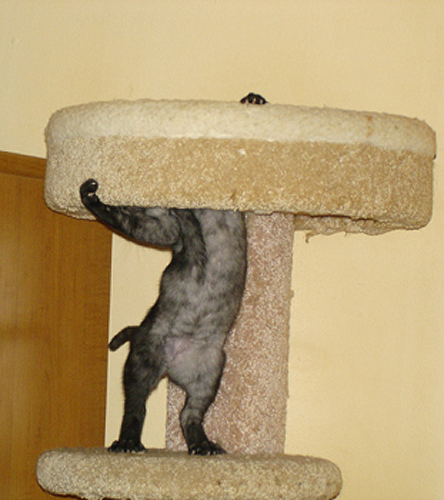 The cat tower has seen better days