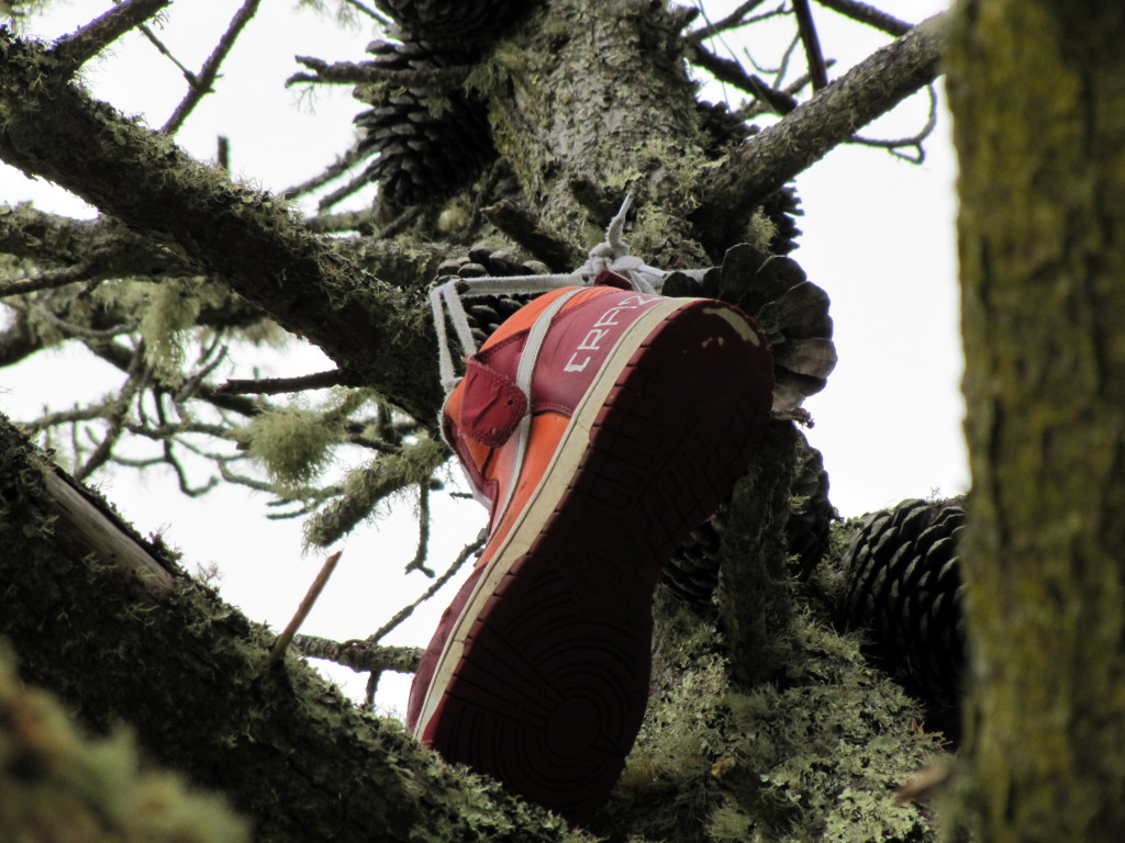 Maybe the tree got drunk and lost the other shoe