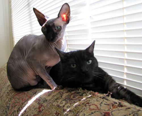 Tito and Kitsy