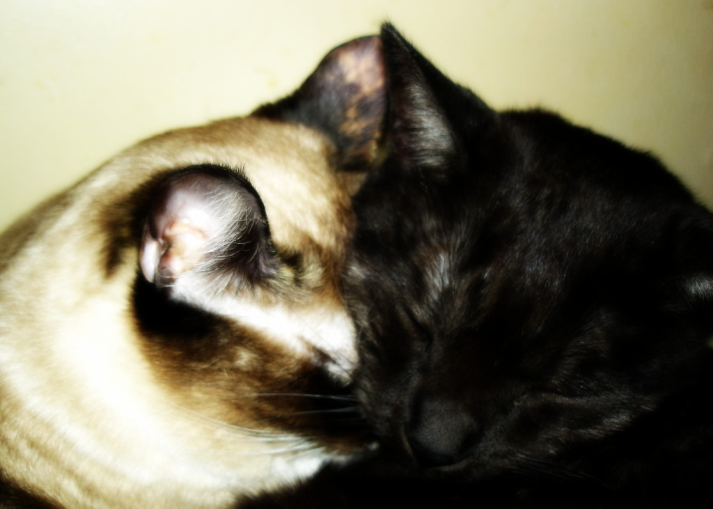Tito and Miss Jenny
