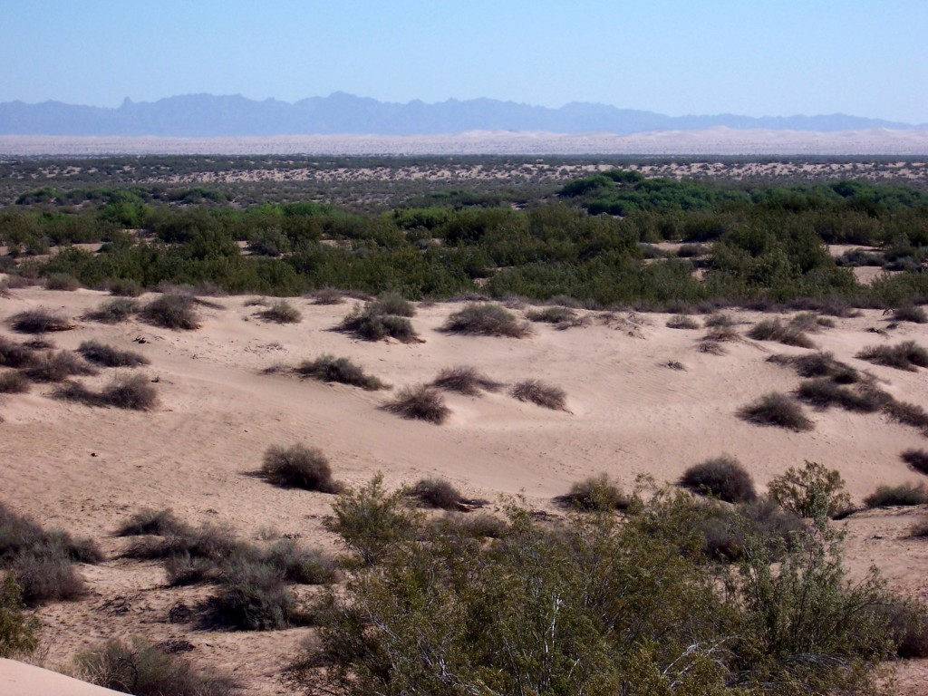 Looking east toward the Algodones Dunes aka Glamis with the Chocolate Mountains in the rear