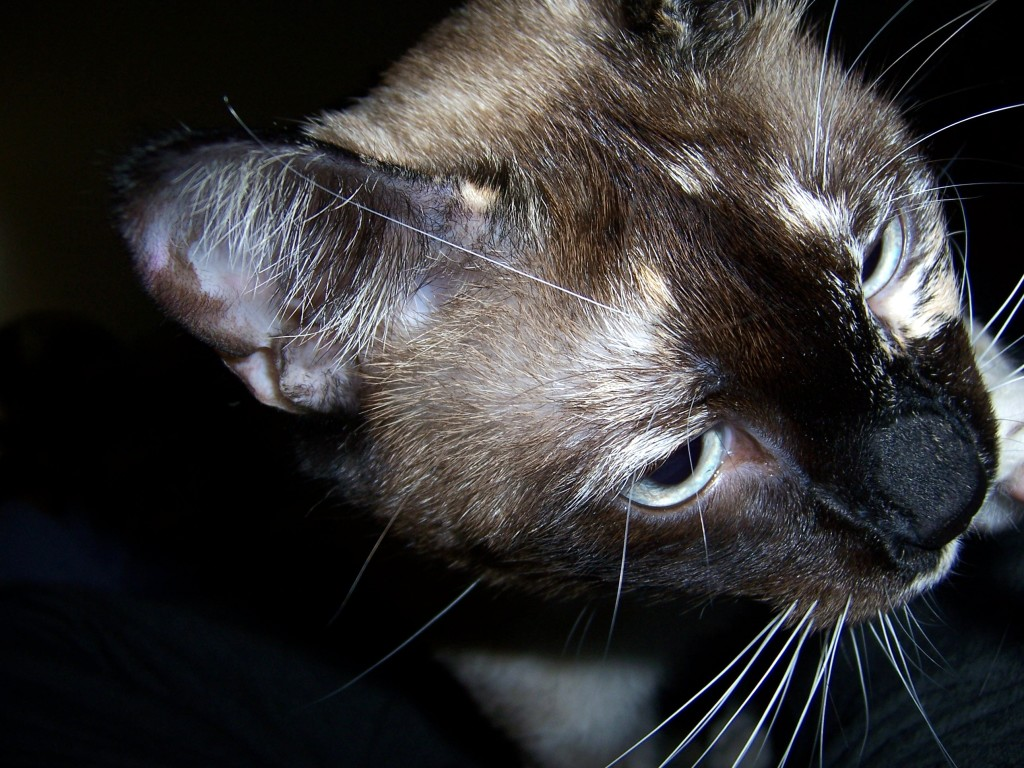 A closeup of Miss Jenny and her magnificent whiskers and eyebrows