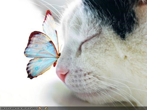 z cat and butterfly