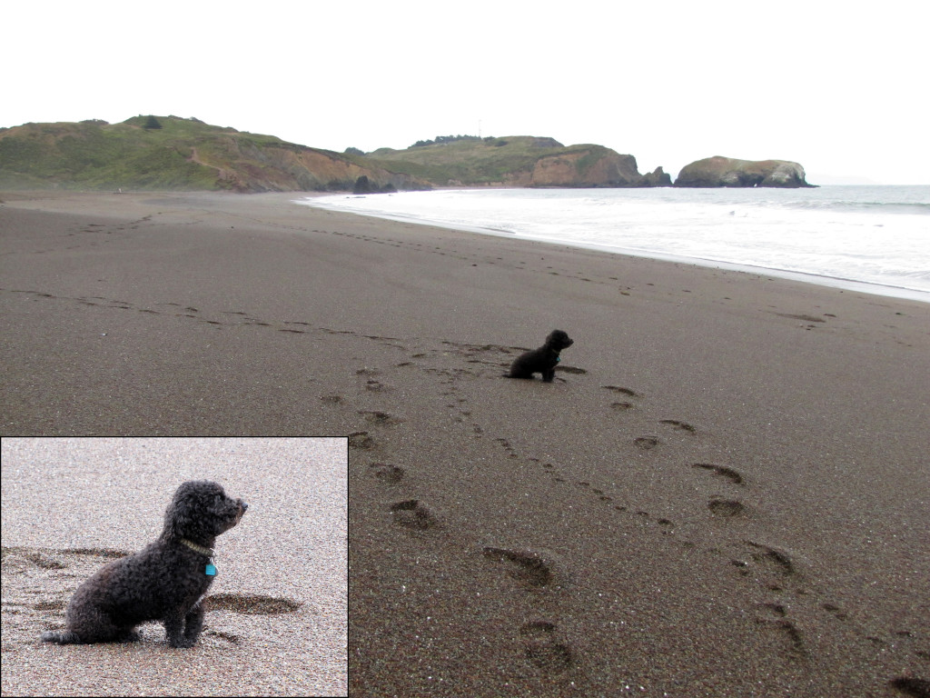 This cute doggie was patiently waiting for their human who was surfing.