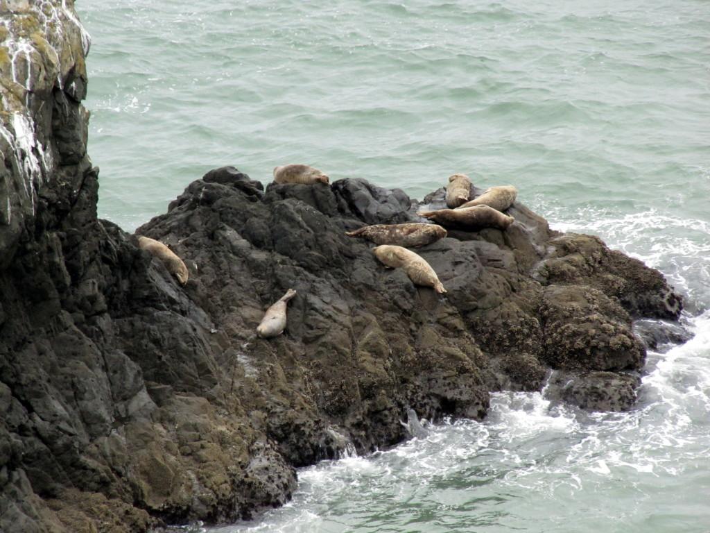Harbor seals by Rudha-an
