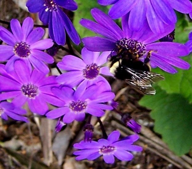 Buzzy buzz buzz