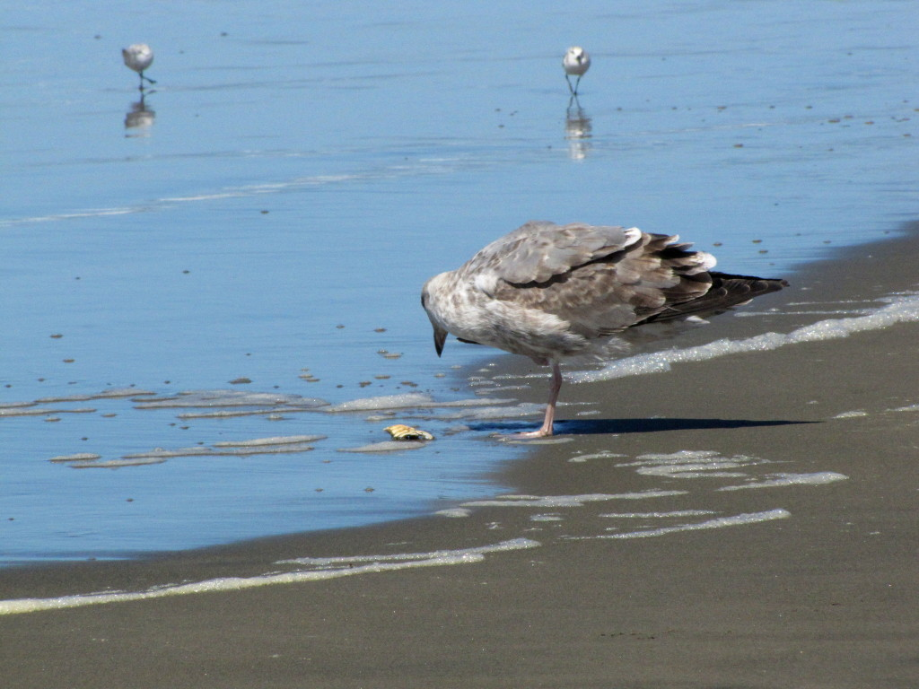 Sea gull has noms