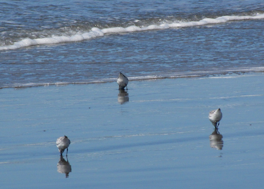 Bird butts in triplicate