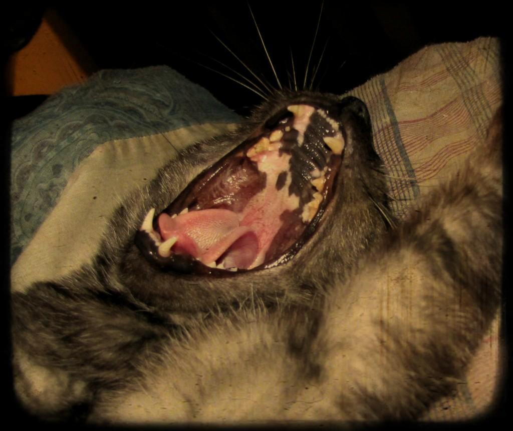 Tito's big yawn