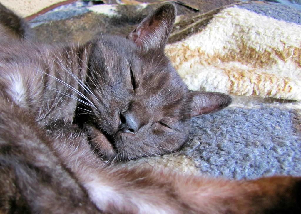 Sleepy Tito