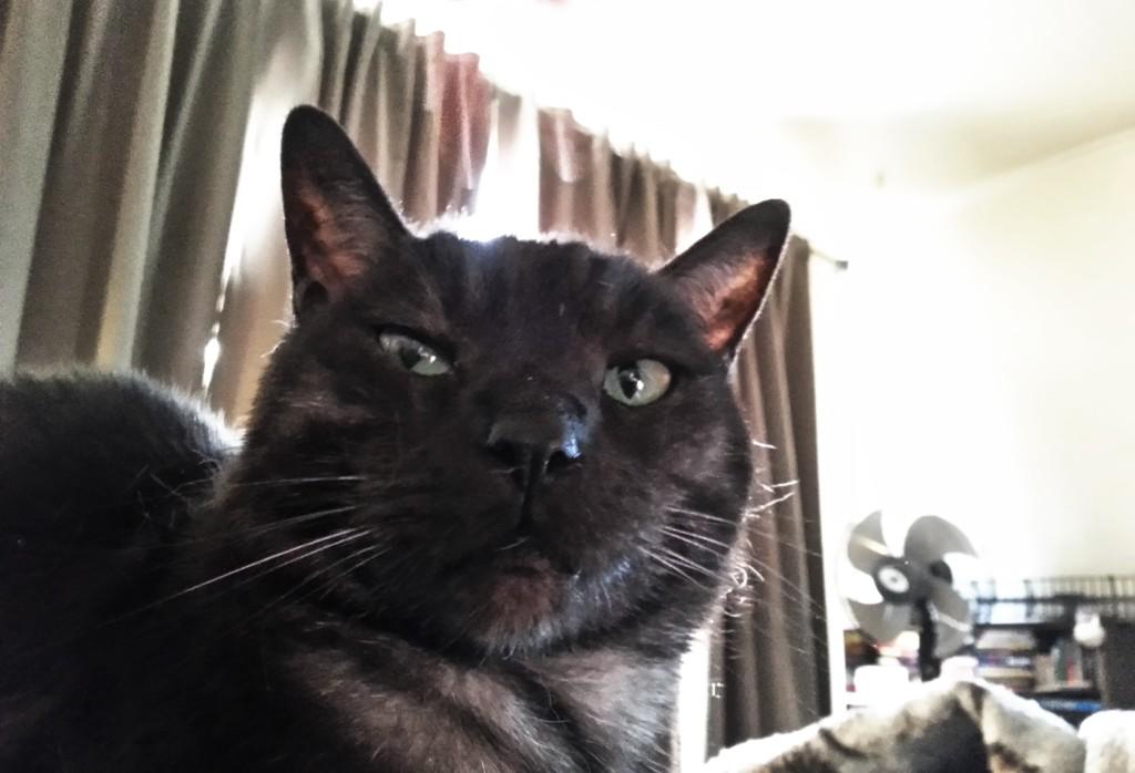 Handsome Tito