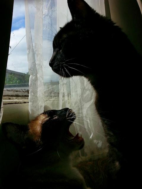 Miss Jenny yawning at Tito.