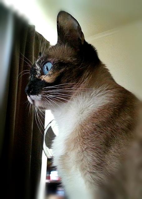 Miss Jenny's profile