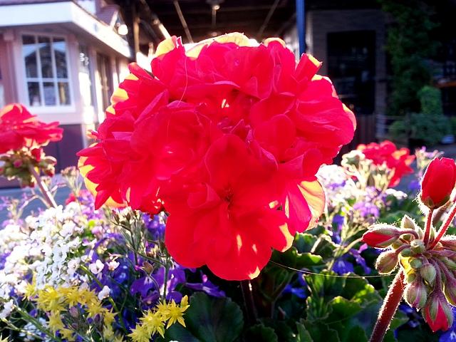 flowers d