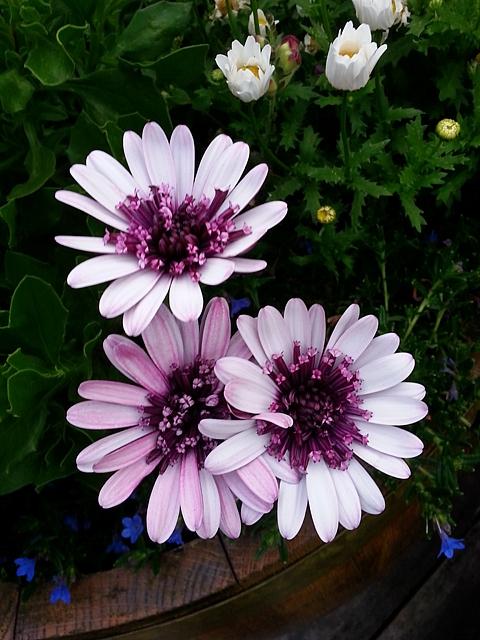 flowers j